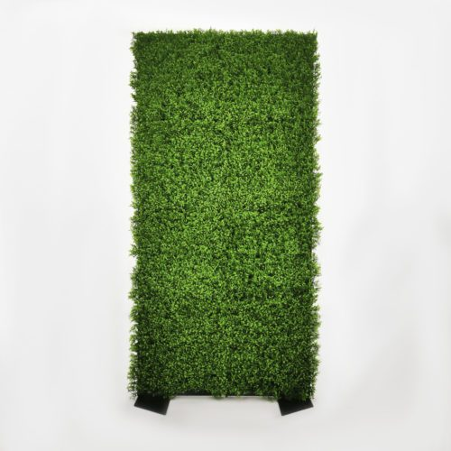 GREEN WALL – HEDGE